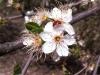 Frühling am Lerchenfeld01