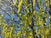 Frühling am Lerchenfeld02