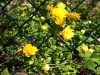 Frühling am Lerchenfeld05