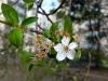 Frühling am Lerchenfeld07