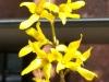 Frühling am Lerchenfeld09