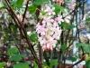 Frühling am Lerchenfeld11