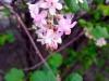 Frühling am Lerchenfeld12