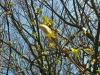 Frühling am Lerchenfeld13